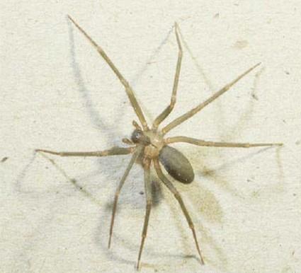 spider_bite_011.jpg