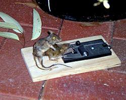 El ratón necrofilo
